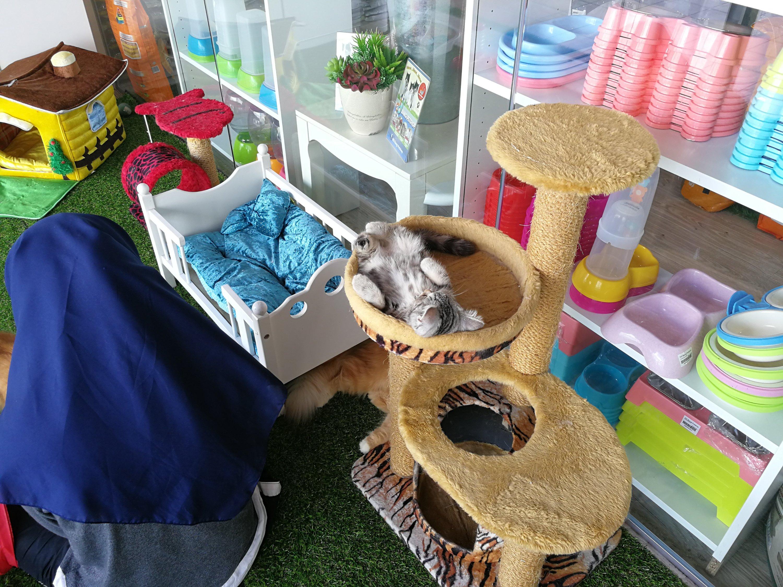 Kedai Barangan Keperluan Kucing Murah